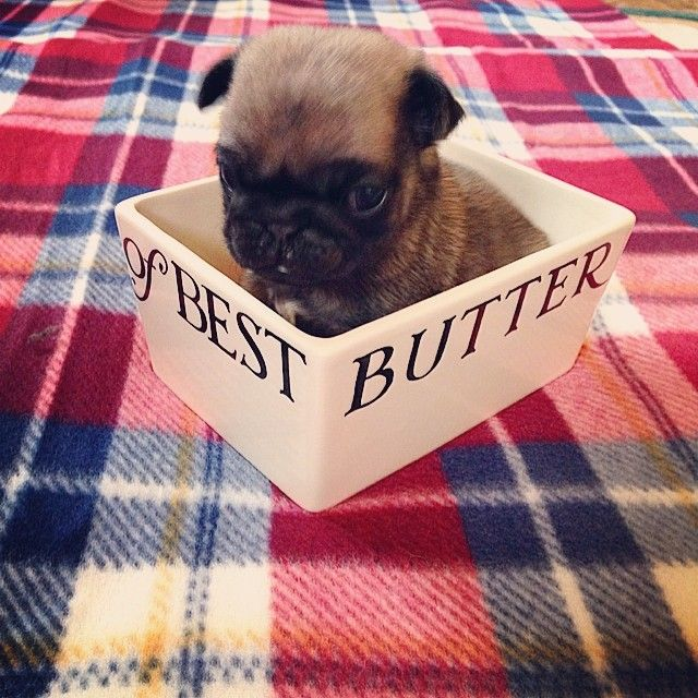 Butter anybody? #EmmaBridgewater