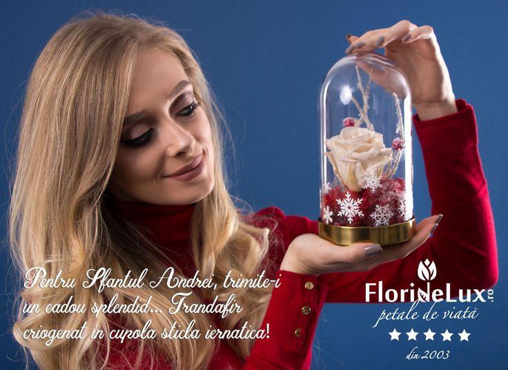 Acum e momentul perfect sa trimiti un cadou special si pretios pentru Sfantul Andrei! Recomandarea specialistilor floristi FlorideLux: trandafir natural criogenat in cupola stralucitoare, cu fulgi de nea.... ❄🥀 https://www.floridelux.ro/trandafir-criogenat-atins-de-zana-zapezii.html