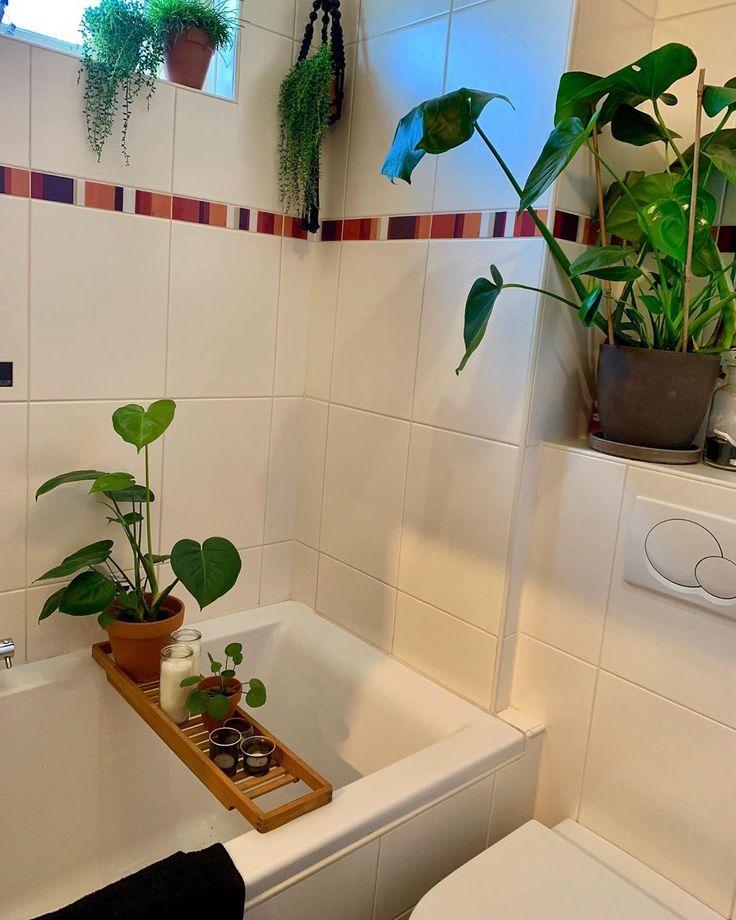 Plants Goedemorgen Allemaal Hier Op De Camping Staan Prachtige Planten Ik Kijk M N Ogen Uit Ook In Onze Badkamer Mogen P Bathroom Bathtub