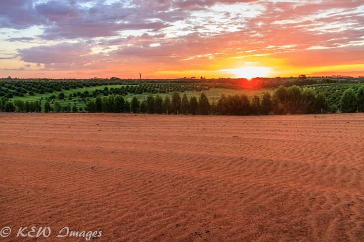 """Another great #Mildura photo by Kerry W """"Sun setting on farmland"""" Thanks very much for sharing :)"""