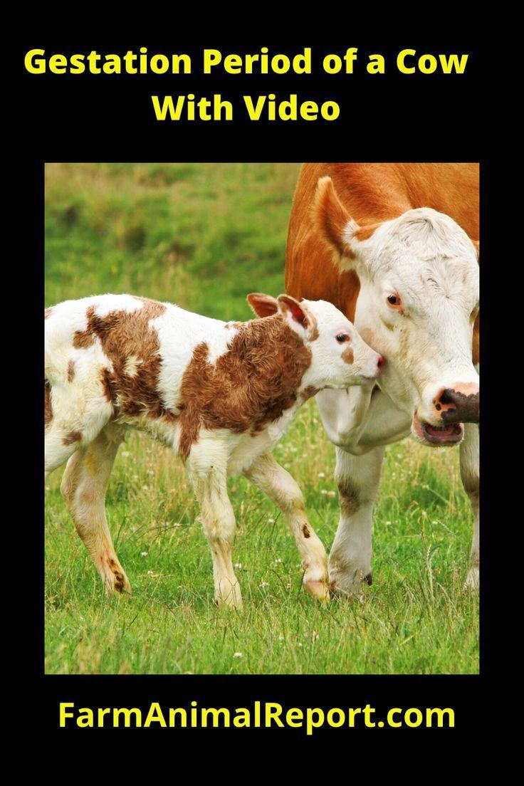 Mammals Gestation Period - Pets Lovers