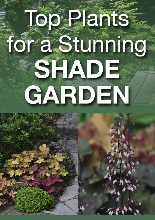Top Plants for a Stunning Shade Garden. Photos show good variety of shade plants and they're identified for you.