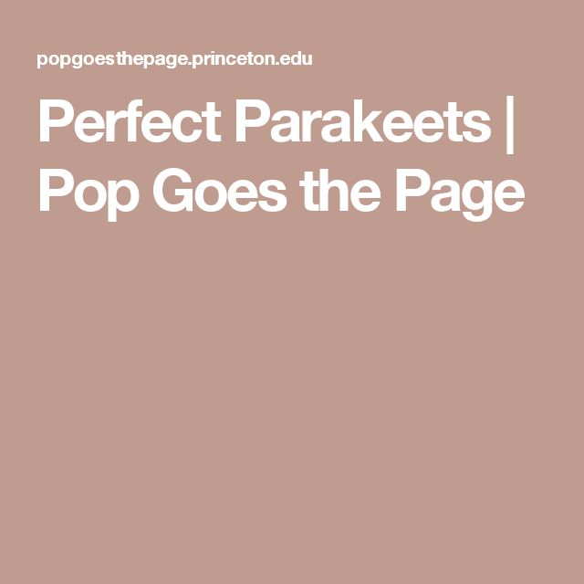 Perfect Parakeets | Pop Goes the Page