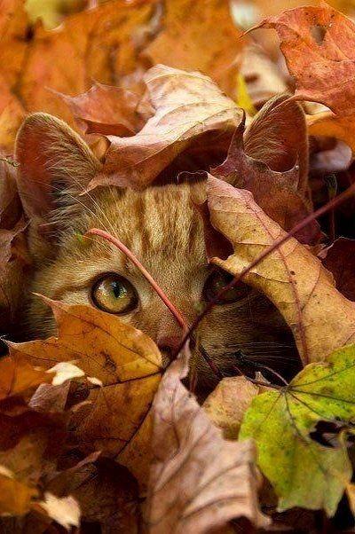 Chat du effeuiller la Marguerite un peu trop longtemps, et l'automne me dit…