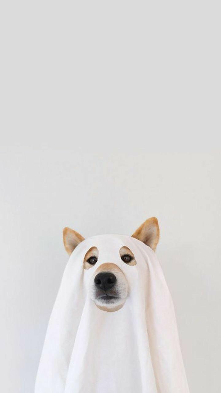 Dog Wallpaper Wallpaperdog Dogwallpaper Lovedogs Cute Dog Wallpaper Dog Wallpaper Iphone Corgi Wallpaper