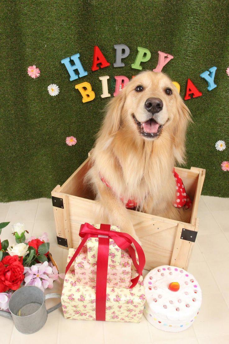Открытки, картинка с собакой на день рождения