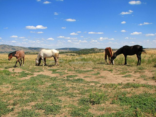 Pin By Gail Henderson On Black Hills Wild Horse Sanctuary