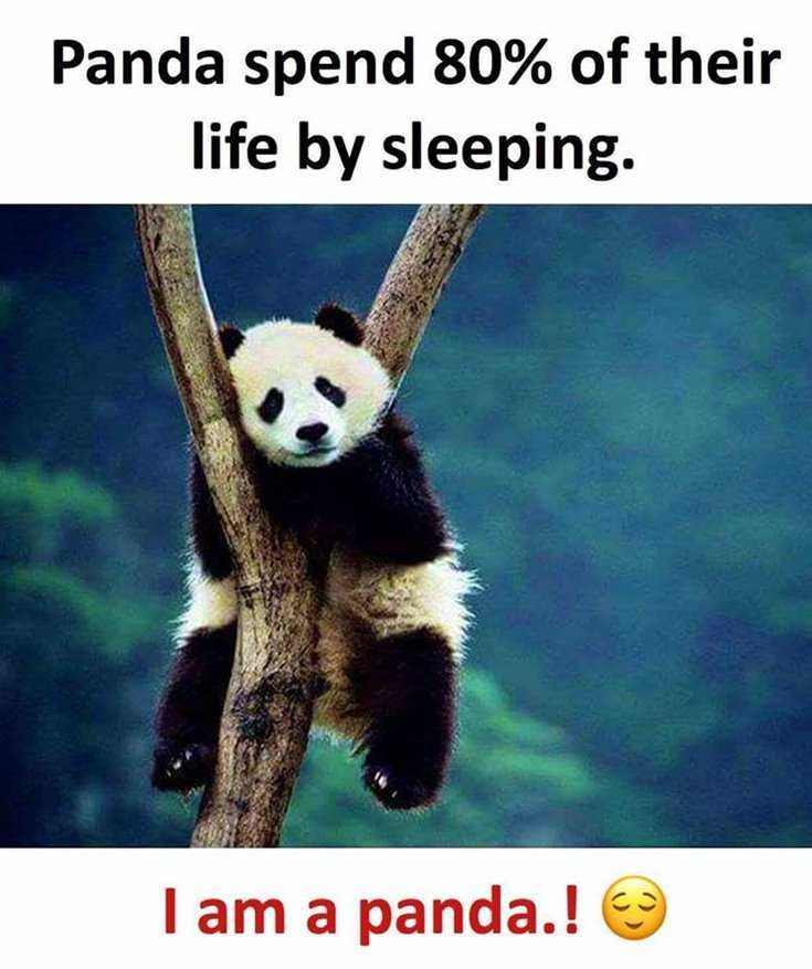 I Am Panda Panda Funny Family Quotes Funny Fun Quotes Funny