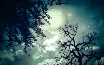 """""""La mitologia astrale è la proiezione celeste della psicologia inconscia"""" (CG Jung) Chi si manifesta sulla scena del cielo notturno? Corpi celesti, galassie? Oppure le luci che brillano lontane celano anche misteri che sfuggono …"""