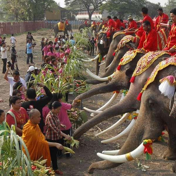 Tailândia celebra dia nacional do elefante