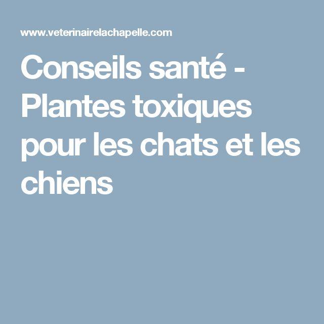 23 best plantes toxiques images on pinterest poisonous plants ems and kitty cats - Plantes non toxiques pour les chats ...