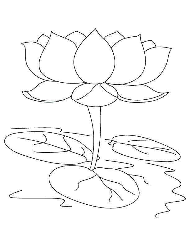 Image Result For Lotus Colouring Images Flower Coloring Pages