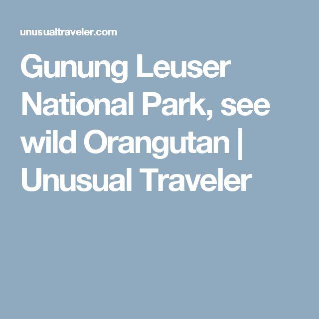 Gunung Leuser National Park, see wild Orangutan | Unusual Traveler