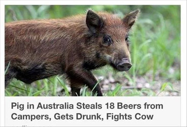 Do you think they mean a REAL pig, or just some stupid Frat Boy?