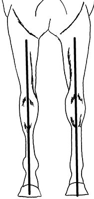 Remedial Shoeing Options For Valgus And Varus Deformities