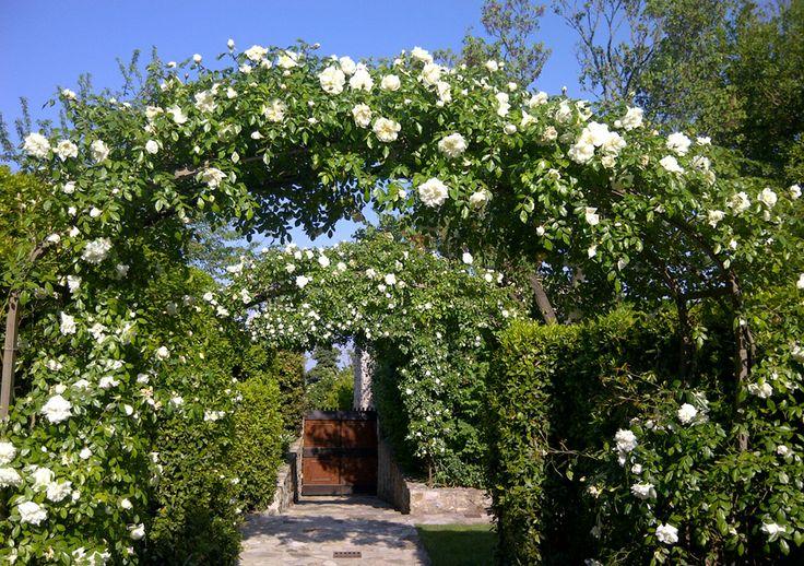 #wedding in #italy - Borgo to rent in exclsuive for your wedding. 5 indipendent #villas up to 30 people #bryllup #slott #bryllupfesten #bryllupitalia http://www.italyprestige.com/wedding/weddingborgo_tuscany/weddingborgo_tuscany.html