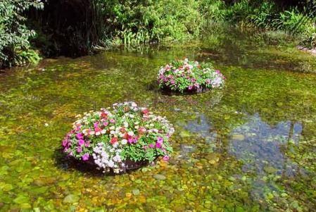 Кроме эстетики, плавающие клумбы выполняют экологическую функцию. Они очищают воду от нитратов, аммиака, фосфатов, а также от органических веществ, которые стимулируют рост нежелательных водорослей. В результате водоем становится прозрачным без специальной чистки. Вдобавок, если в пруде или бассейне есть живность (рыбки, черепашки, лягушки), цветник станет для них оазисом в летний зной.
