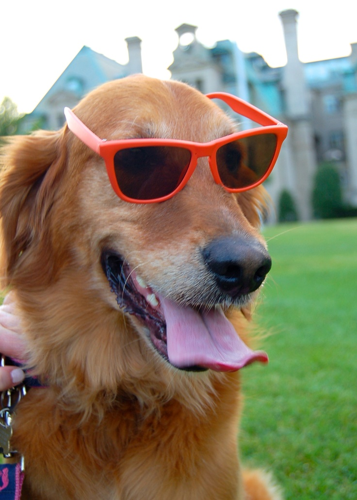 Who needs hot dogs?  This is one cool dog!
