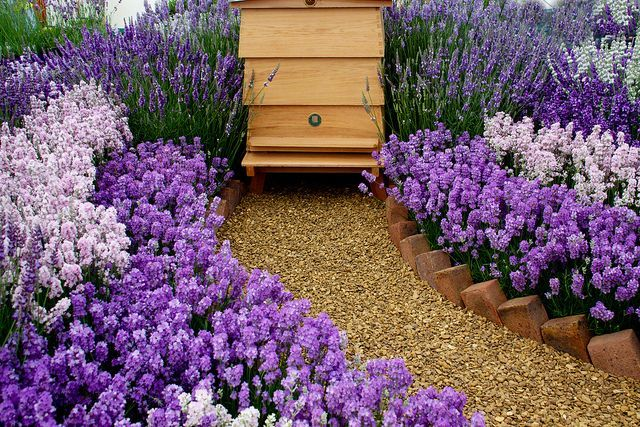 honey bee garden | Honey Bees  How I would just die to have such a sweet looking location for my honey making friends! Someday ;)