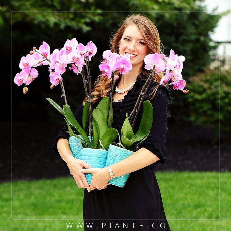 ¿Cuál es la cantidad de sol indicada para tu orquídea? - Cuando adquirimos una orquídea phalaepnosis, una de las primeras indicaciones que recibimos refiere a que la ubiquemos en un lugar donde no reciba tanta luz. Esto NO quiere decir que las Phalaenopsis no necesiten NADA de luz. Las plantas viven y florecen muy contentas muy cerca del cristal de la ventana. Lo que hay que cuidar es, sobre todo, que no les dé el sol directo, en especial al mediodía.