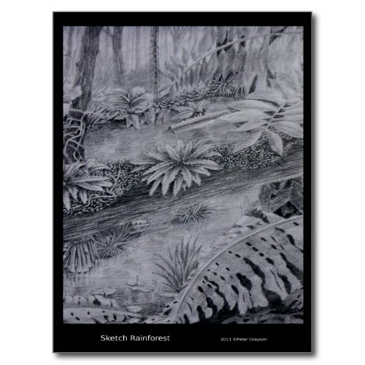 Rainforest Sketch Postcards artwork by Peter Grayson