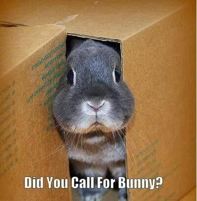 84 best images about funny bunny rabbits on pinterest for Call the easter bunny phone number