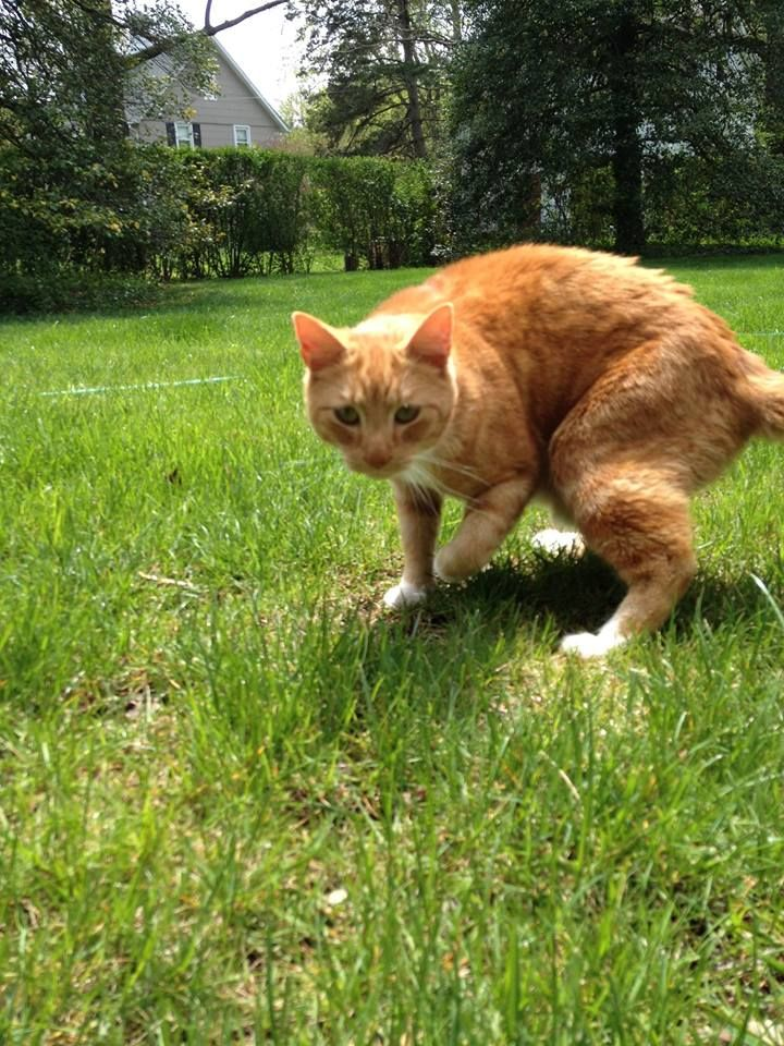 Found! Orange tabby cat found in CatonsvilleMelvin Ave