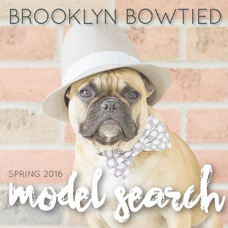 Tomorrow is the LAST DAY to enter our model search! I am so completely overwhelmed my how many AMAZING entries there are - this is going to be one tough decision!  It's that time again! Brooklyn Bowtied is looking for 4-6 new dog models to add to our team for Spring 2016!  How to enter: 1.) Make sure you are following @brooklynbowtied 2.) Repost this photo with the tag #brooklynbowtiedsp16 so we can find your entry!  3.) Tag up to ten of your best photos with the same tag.  4.) Official…
