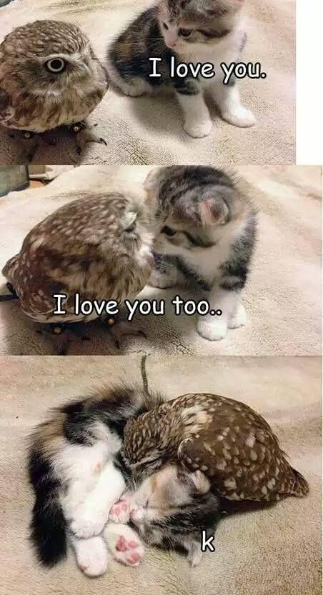 El gato y el buho