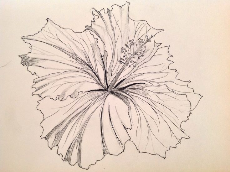 23 best tattoo inspiration images on pinterest ebony for Hibiscus flower tattoo sketches