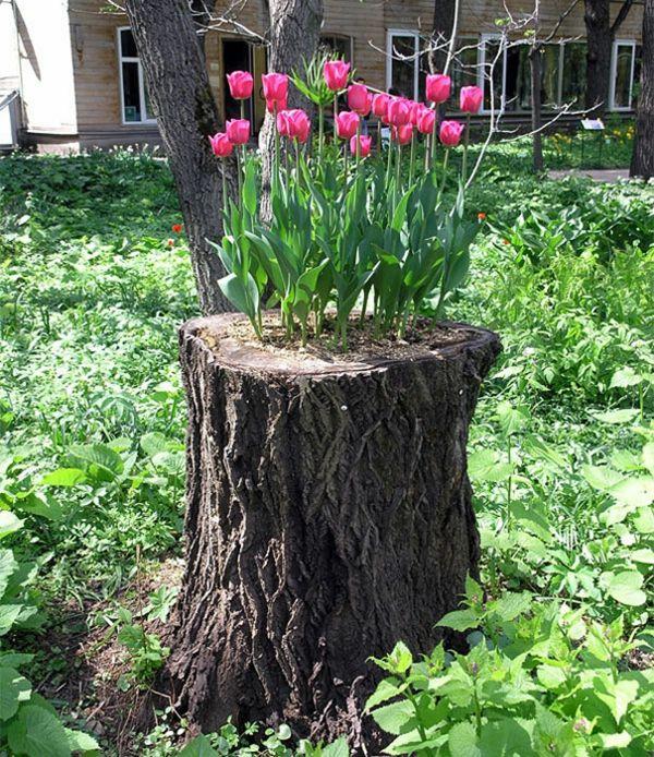 Die besten 25 tulpen garten ideen auf pinterest tulpen in der vase tulpenbirnen pflanzen und - Baumstumpf garten dekorieren ...