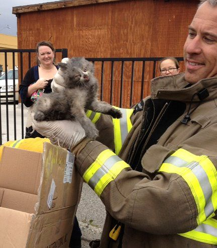 FIREFIGHTERS RESCUE KITTEN TRAPPED IN CAR ENGINE