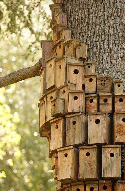Pick Your Tree House - Villa Montalvo