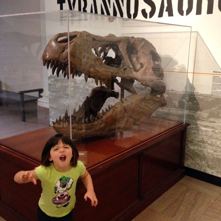 5 Questions with a 5-Year-Old chats with a Smithsonian paleontologist at the National Museum of Natural History.