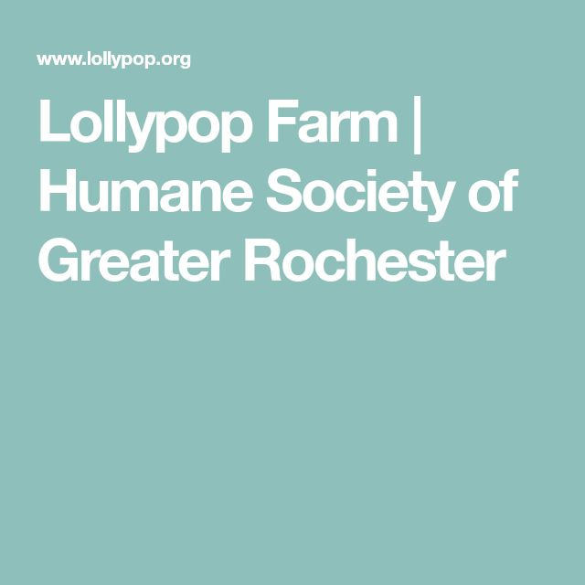 Lollypop Farm | Humane Society of Greater Rochester