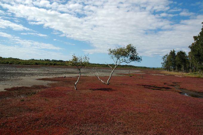 Point Halloran Reserve Walk Victoria Point
