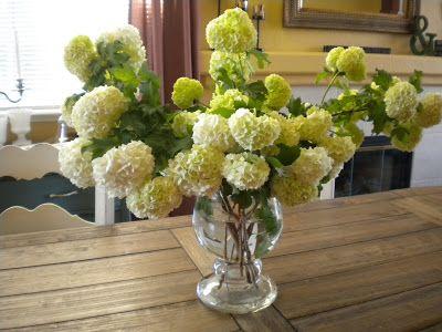 Shabby Brocante: Snowball Viburnum Bush