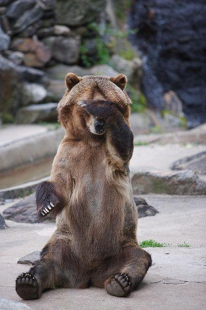 Bear is playing peek-a-boo with the zookeeper!    [Photo by ~davidjschloss~ (David Schloss)  June 6 2006 Bronx Zoo, New York]  'h4d' 120801