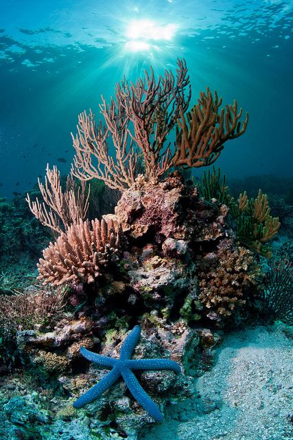The ocean has beautiful coral reef, fish and is the most peaceful place, we must also protect this environment from dumping.