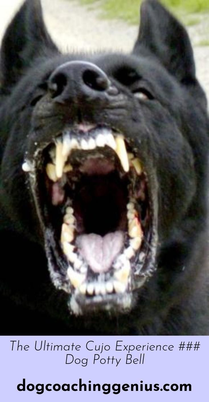 Want To Know More About Dog Barking Language Scary Dogs