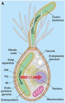 origin of life hypothesis
