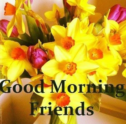 Good Morning Friends quotes quote morning good morning morning quotes good morning quotes