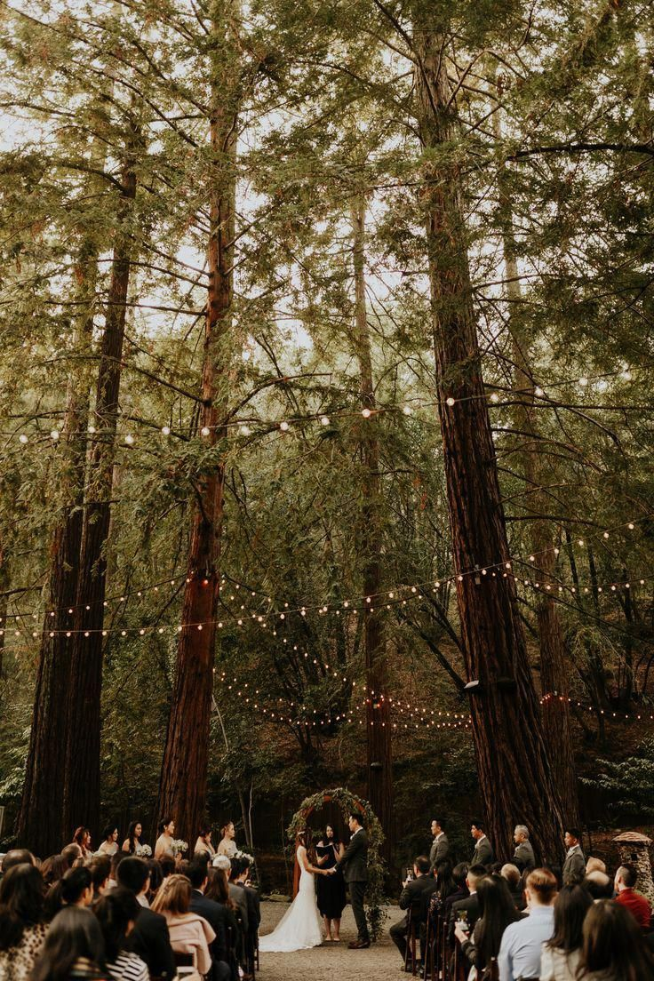 Wedding Photography Ideas In 2020 Forest Theme Wedding Forest Wedding Venue Redwood Wedding