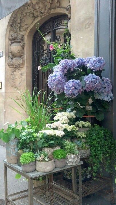 Parisian florist shop. Even the most common of flowers -- have a more beautiful…                                                                                                                                                                                 More