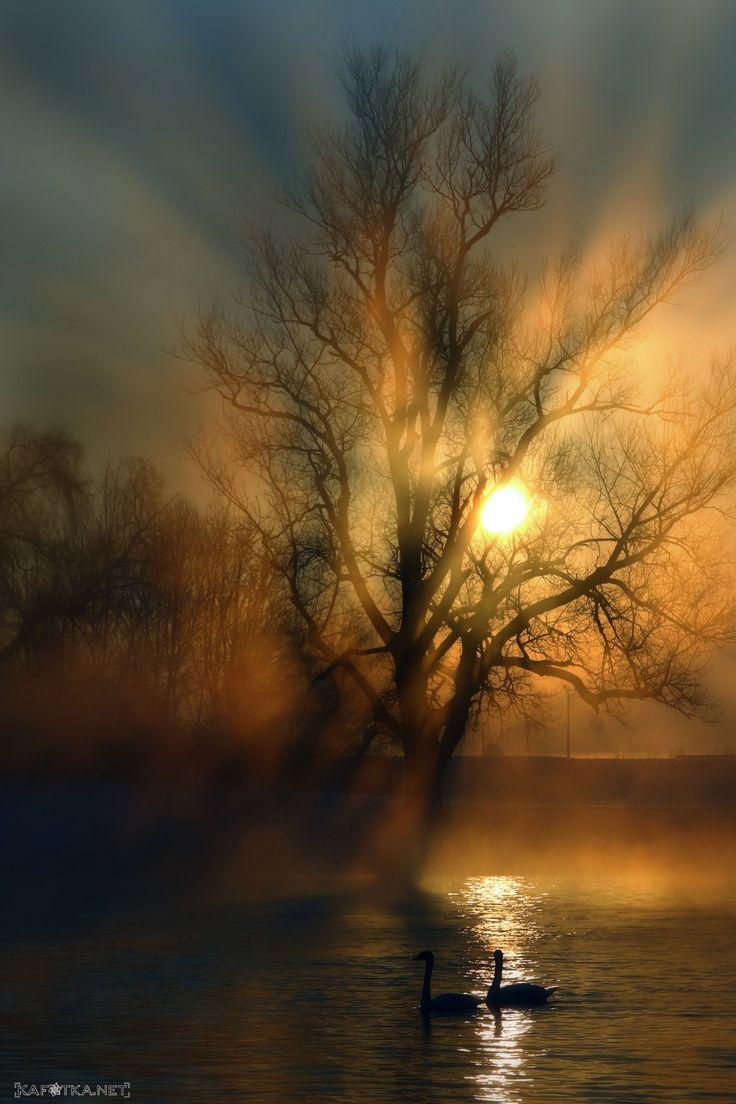 sonnenuntergang mit nebel und - photo #48