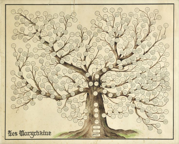 The 17 Best Family Tree Images On Pinterest Family Tree Chart