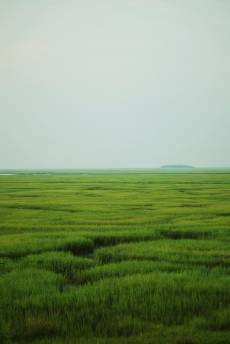 salt marsh near Darien, Georgia