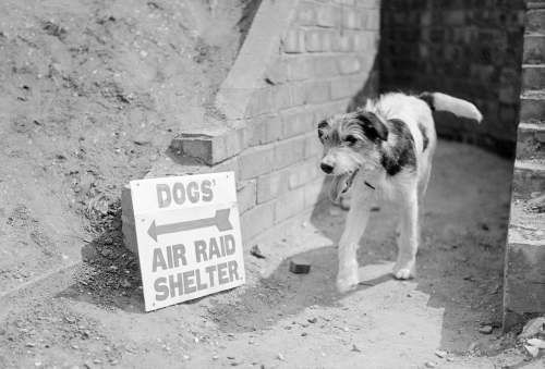 Air raid shelter for dogs, britain, 1940......anybody else impressed that British dogs can read?