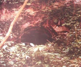 ÜNYE TARİHİ YERLERİ VE YAPILARI - yesilcennetunye - Yazkonağı Mağarası