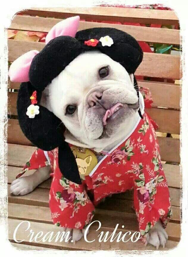 Best 25+ Bulldog costume ideas on Pinterest | Bull dog ...